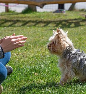 Cours de dressage pour chiens aux herbiers