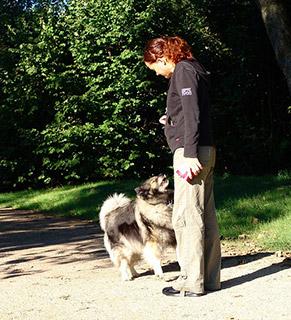 Cours de d'éducation canine aux herbiers