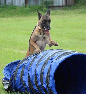 Education pour chiens aux herbiers